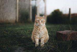 רכישת מזון לחתול ברשת